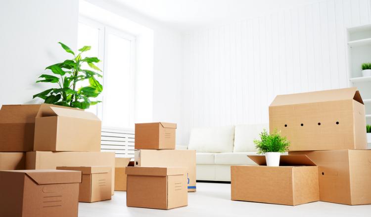 Comment faire un emballage pour une plante ?