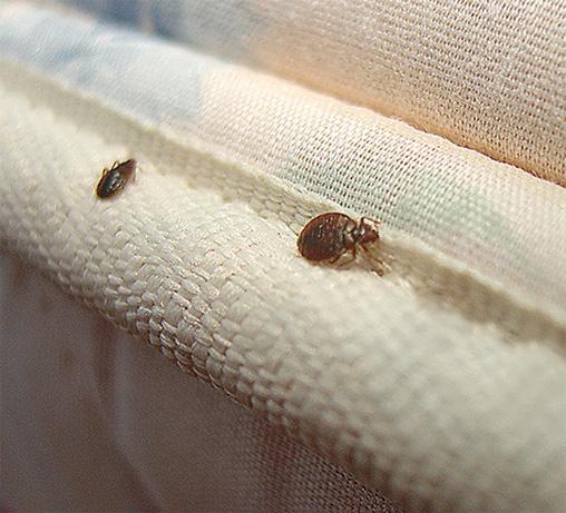 Quelles astuces pour la réussite d'une entreprise traitement des punaises de lit ?